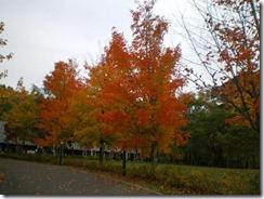 メープルロッジの紅葉