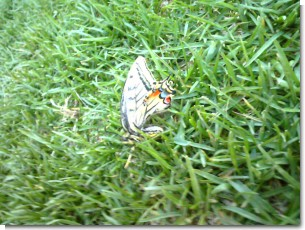 春の蝶々.jpg