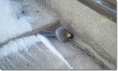 鳥発見。.jpg