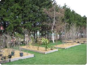 樹木1.jpg