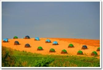 107 収穫の丘.jpg
