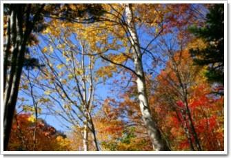 115 紅葉の木立.jpg
