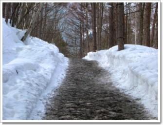 120 雪解けの道.jpg