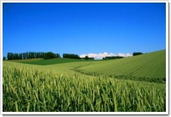 137 麦の丘.jpg