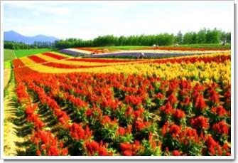 140 虹色の丘.jpg