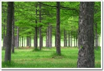 151 緑の木陰.jpg