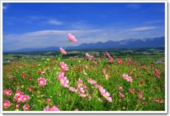 18 夏風の丘.jpg