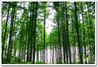 30 樹林.jpg