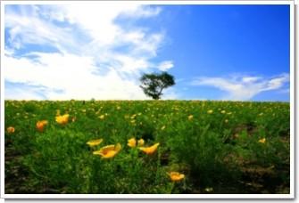 40 カレンな花.jpg
