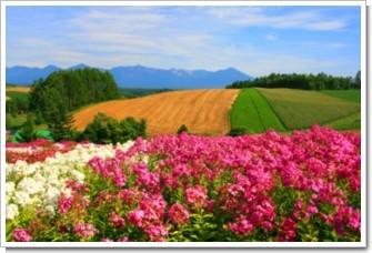 51 桃色の丘.jpg