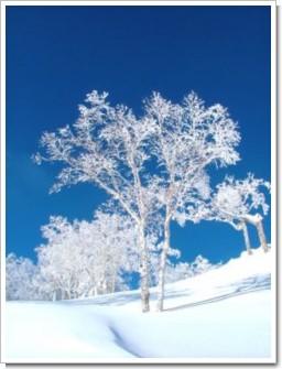 60 樹氷の朝.jpg