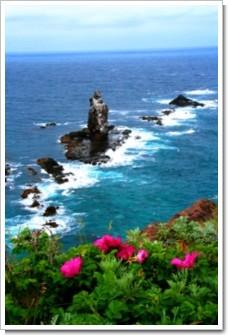 62 岬に咲く赤い花.jpg