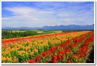 78 丘の花畑.jpg