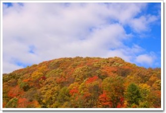 81 紅葉の森.jpg