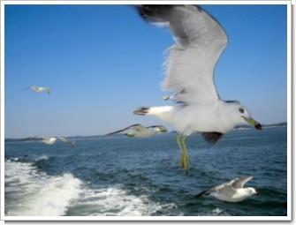 82 海峡の翼.jpg