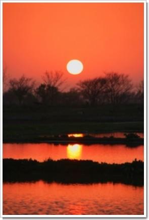 167 水田と太陽.jpg