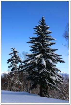 170 サンタの樹.jpg