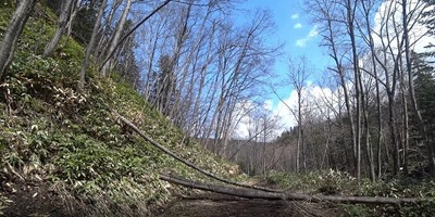 2 いたる箇所で倒木