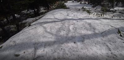 4 数日前の熊の足跡