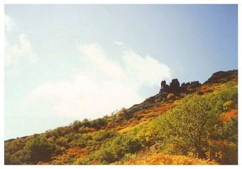 まねき岩img-Y12114435.jpg