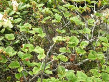 高山植物 091.jpg