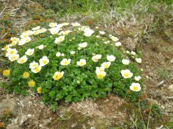 高山植物 093.jpg