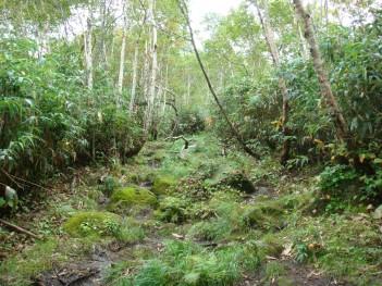 登山道 061.jpg