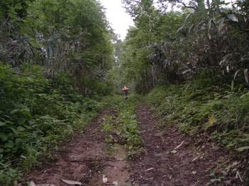 登山道-タモギタケ 061.jpg