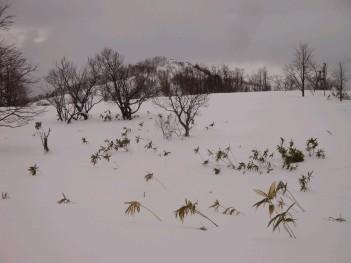 台地から塩谷丸山 045.jpg