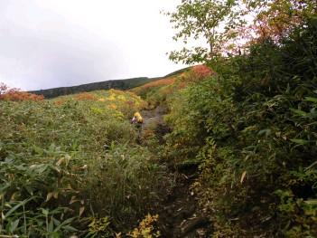 分岐からの登山道 019.jpg